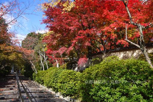 宗忠神社の紅葉
