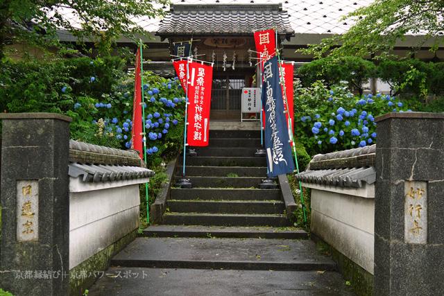 妙行寺の紫陽花