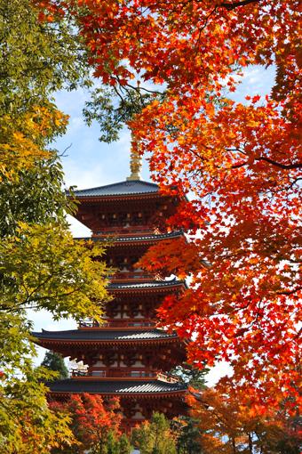 成相寺の五重塔 紅葉