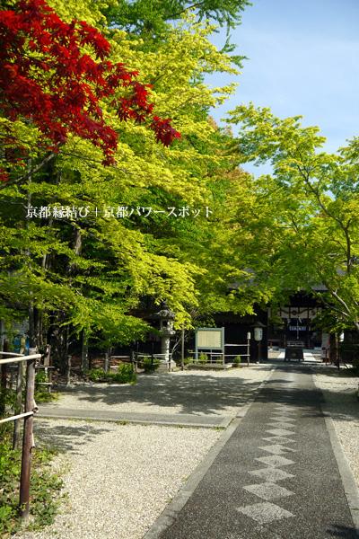 梨木神社の青モミジ