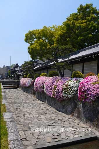 西本願寺のツツジ