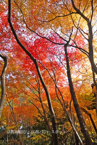 野仏庵の紅葉