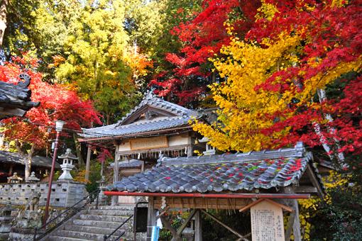 能満神社の紅葉