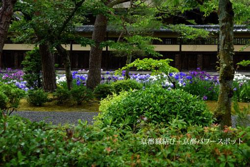 野村別邸「碧雲荘」の花菖蒲