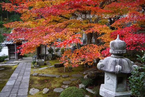 往生院の紅葉