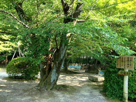 随心院の小町屋敷跡