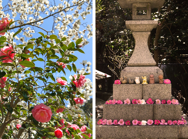 大豊神社 春の花