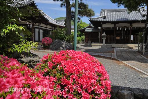 六請神社のサツキ