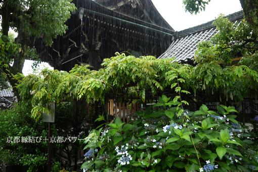 六孫王神社の紫陽花