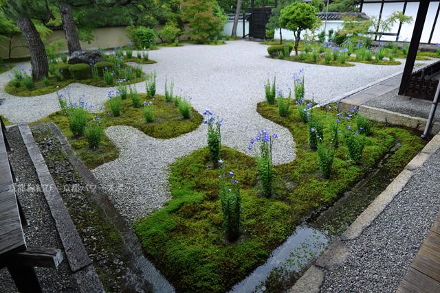 廬山寺の源氏庭の桔梗