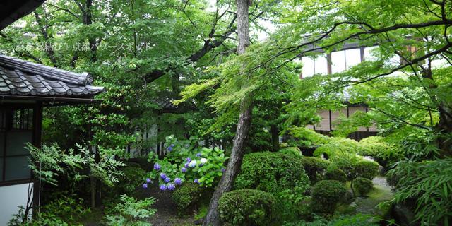 廬山寺の庭