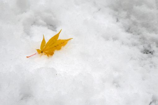 龍安寺の雪