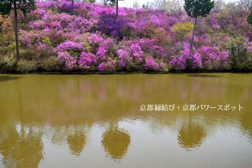 楞厳寺のミツバツツジ