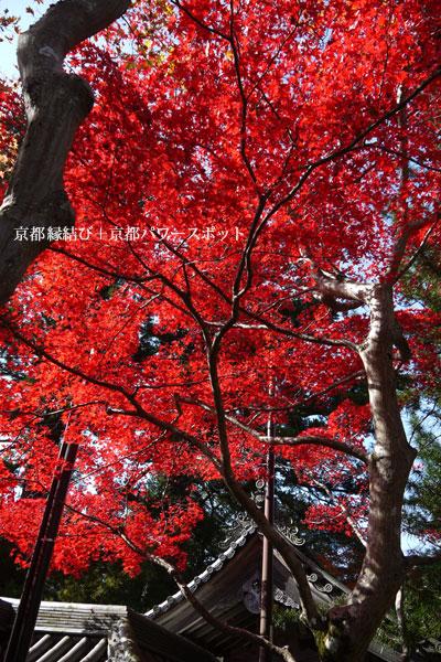 西明寺の紅葉