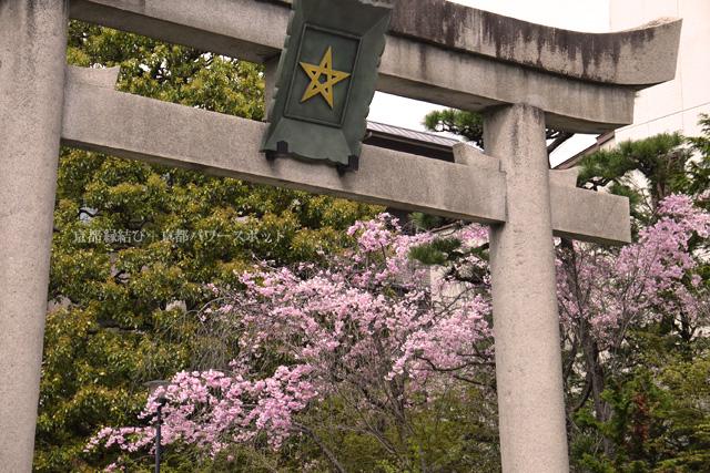 晴明神社の桜
