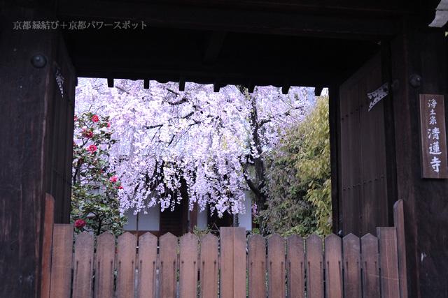 清蓮寺の枝垂桜