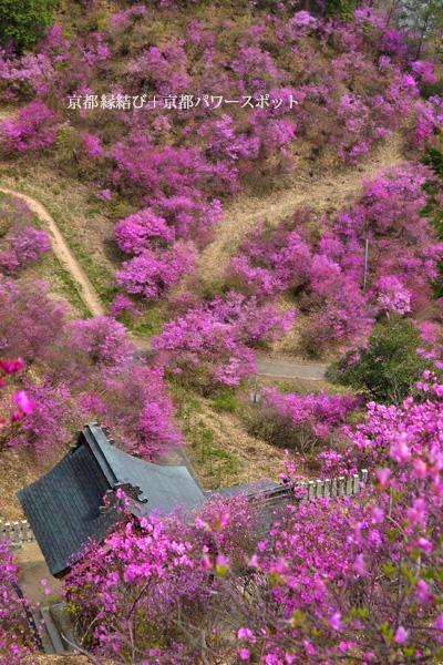 獅子崎稲荷神社のミツバツツジ