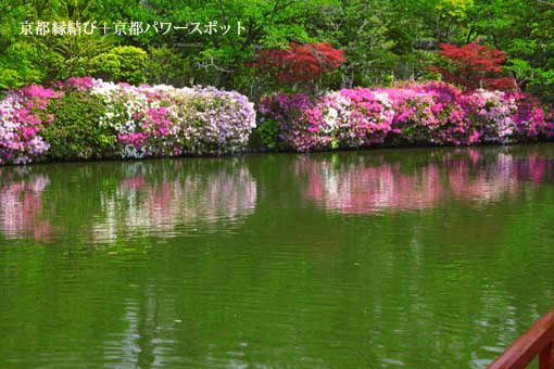 神泉苑のツツジ