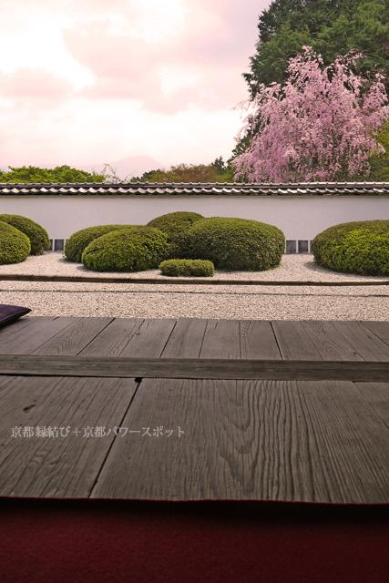正伝寺の桜