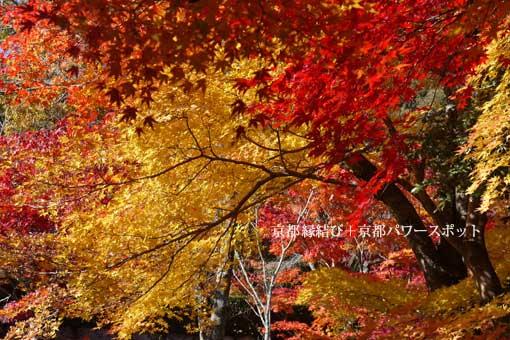 勝持寺の紅葉