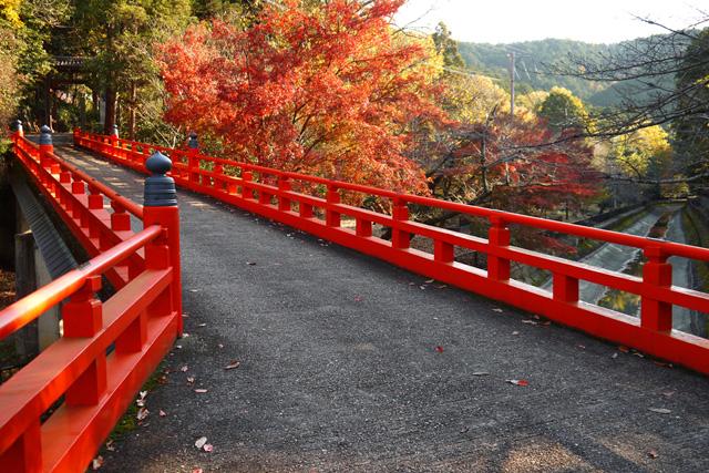 本圀寺の紅葉