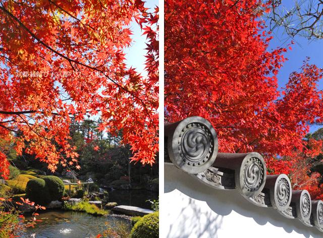妙心寺退蔵院の紅葉