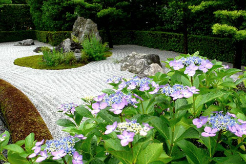 退蔵院 紫陽花