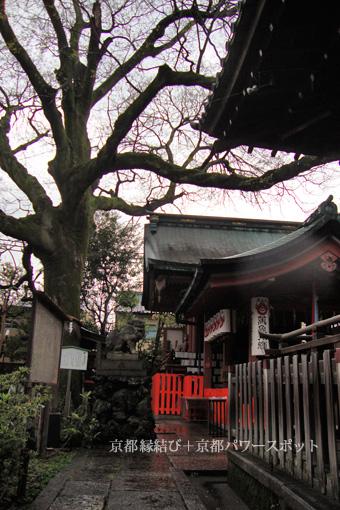 武信稲荷神社のエノキ