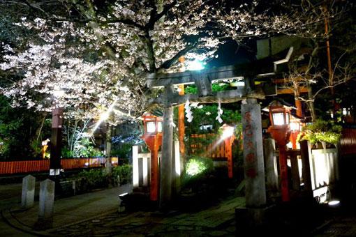 辰巳大明神の夜桜