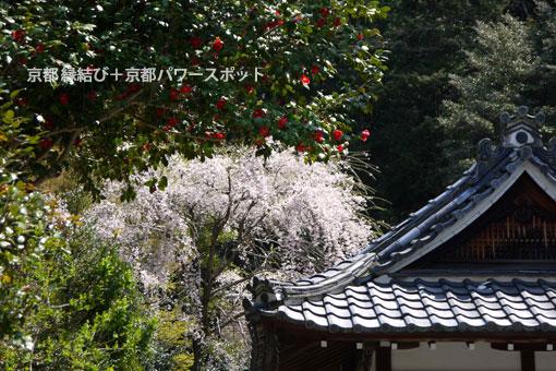 大豊神社の桜