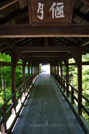 東福寺偃月橋の青もみじ