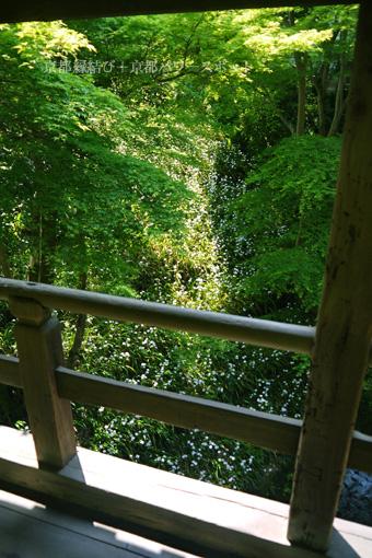 東福寺偃月橋のシャガ