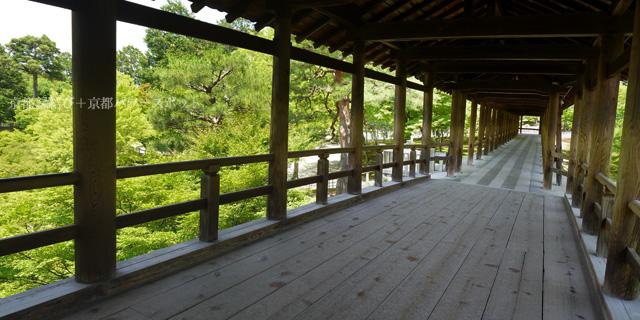 東福寺通天橋から見る青もみじ