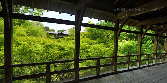 東福寺臥雲橋から見る青もみじ