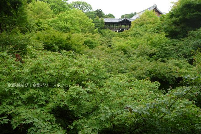 東福寺のあおもみじ