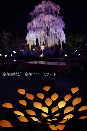 東寺の枝垂桜