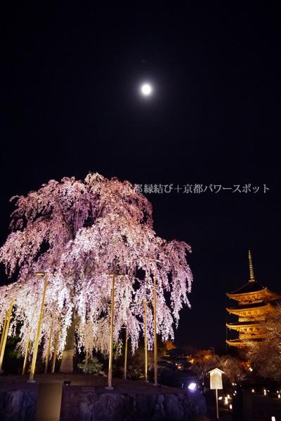 東寺の八重紅枝垂桜