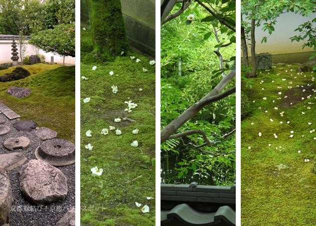 妙心寺東林院の沙羅