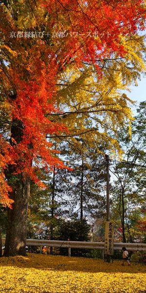 山崎聖天の紅葉