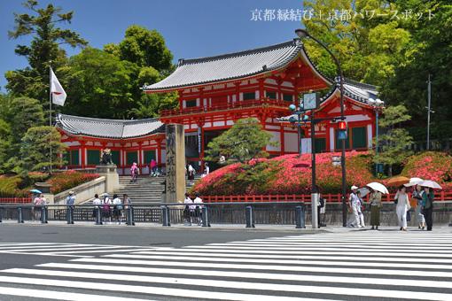八坂神社のサツキ