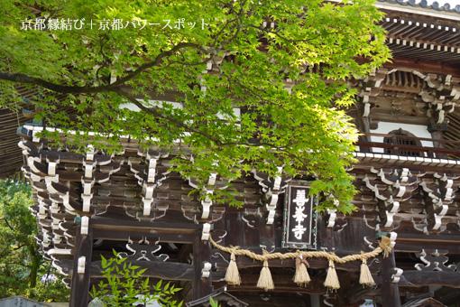 善峯寺のサツキ